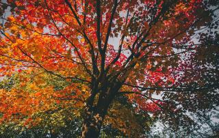 Atascadero Fall Trees